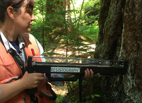 In a forest, a worker measures a tree with a tool labeled as a Resistograph.